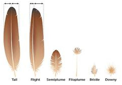 Different bird feathers - photo#25