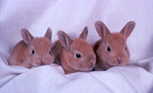 A to Z of Rabbits : Twootz com