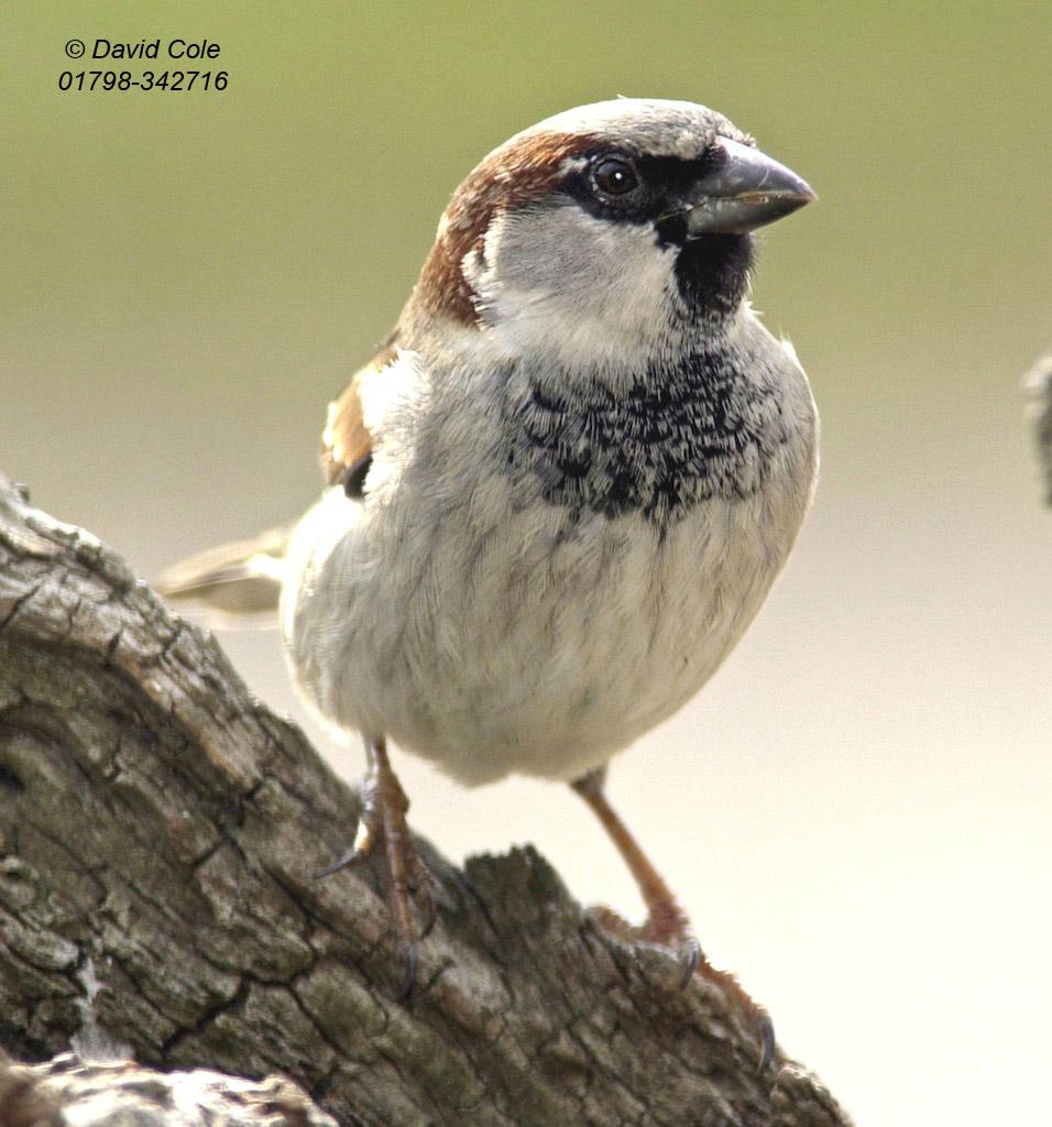 Bird Beak Twootz Com
