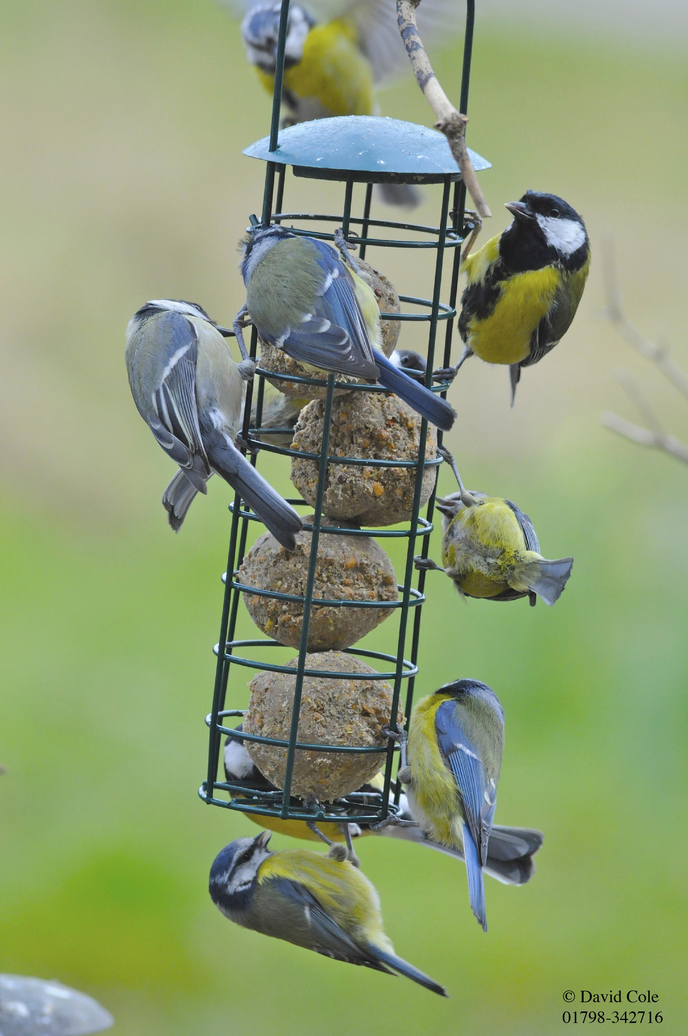 bird many defeated they problems feeding wild be small birds feeder can birdfeedingproblems but for all