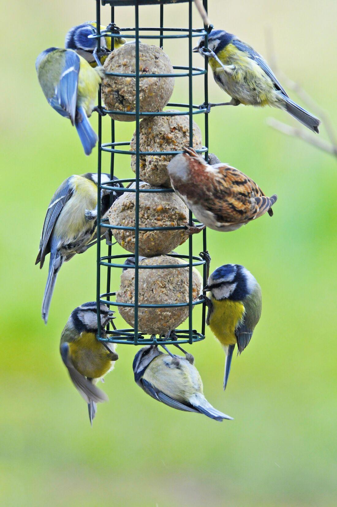 us birds identification