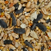 All Season Mealworm Feast