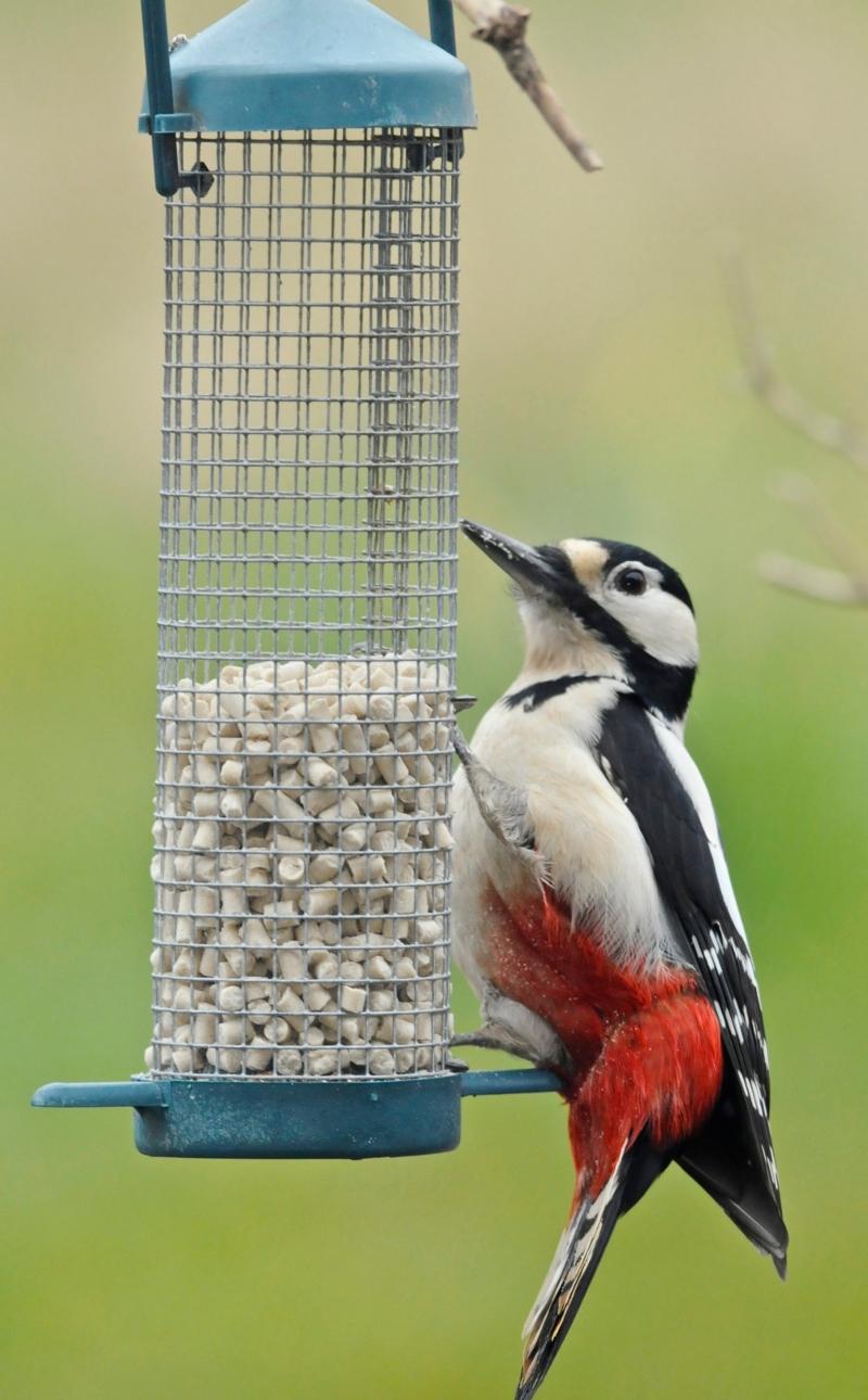 suet pellets   suet bird food twootz