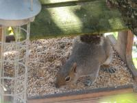 Oy! Get off my bird food!