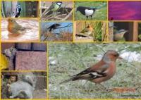 Collage I made of some of my back garden visitors