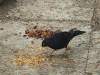 "Blackbird ""I think I'll try the mealworms first."""