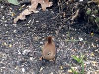 The wren kept still for just long enough for me to take the photo!