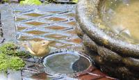 Chiffchaff attempting a bath in the man hole cover