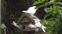 Room for 2 more ?