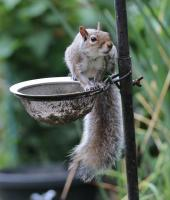 Squirrel on feeder 01
