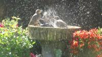 Bath time starling chicks