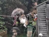 We'd hoped that by placing our bird feeders high on a washing line, they'd be secure from our squirrels. 